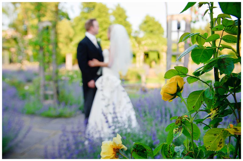 bride and groom embrace surrounded by lavender yellow roses in beautiful gardens of wedding venue Great Fosters