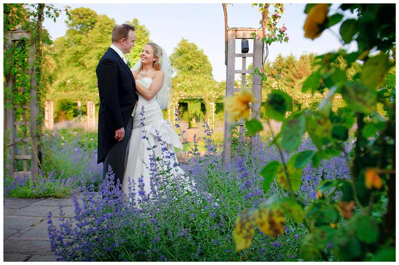 bride and groom embrace near lavender in gardens of in gardens of Great Fosters