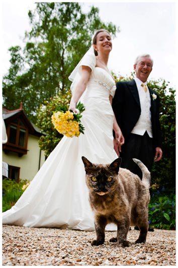 wedding cat