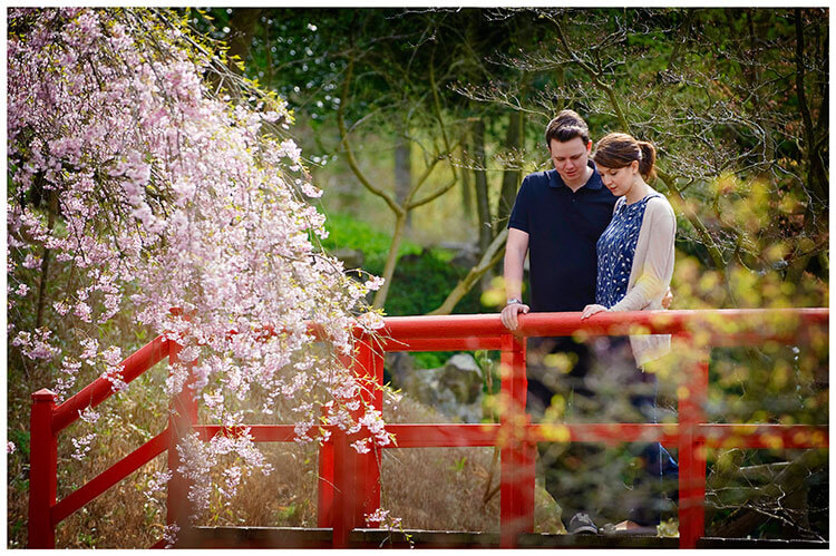 Fanhams Hall pre-wedding couple, red bridge, blossom