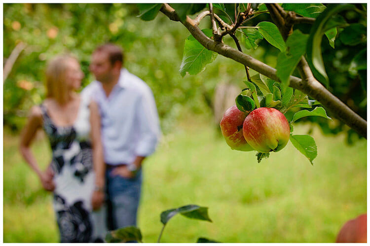 Pre-Wedding Photography shoot in Cambridgeshire apples on tree couple embrace in background